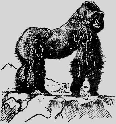 джордж б шаллер год под знаком гориллы