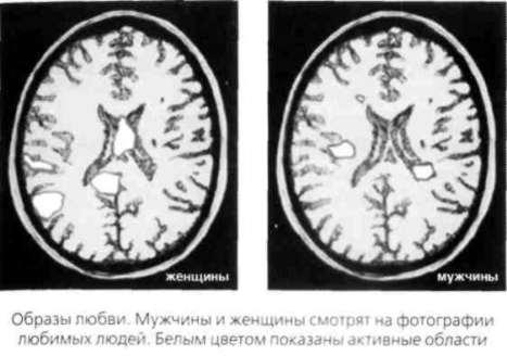Мозг мужчины во время секса