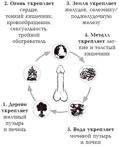Член с грибовидной головкой