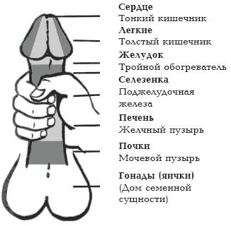 нормальный размер половой член Сарапул