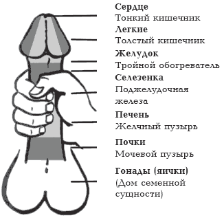 размер полового члена мужчины Томари